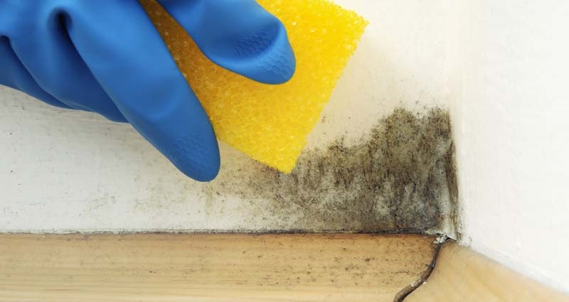 Como eliminar el moho de tus paredes